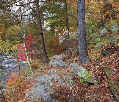 Deer banning state park mural craig blacklock murals for Deer mural wallpaper